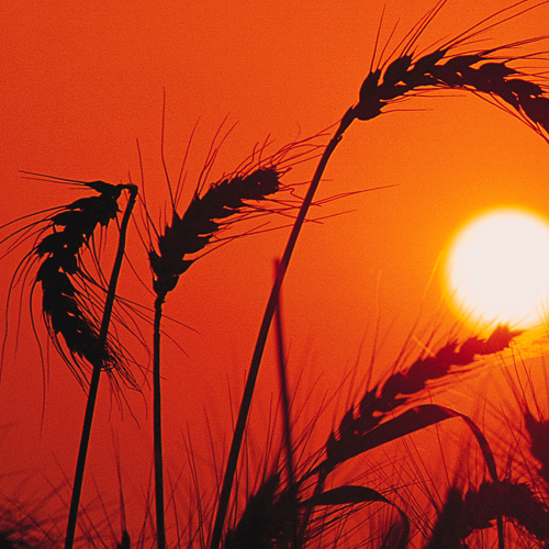 Wheat Policies and Procedures