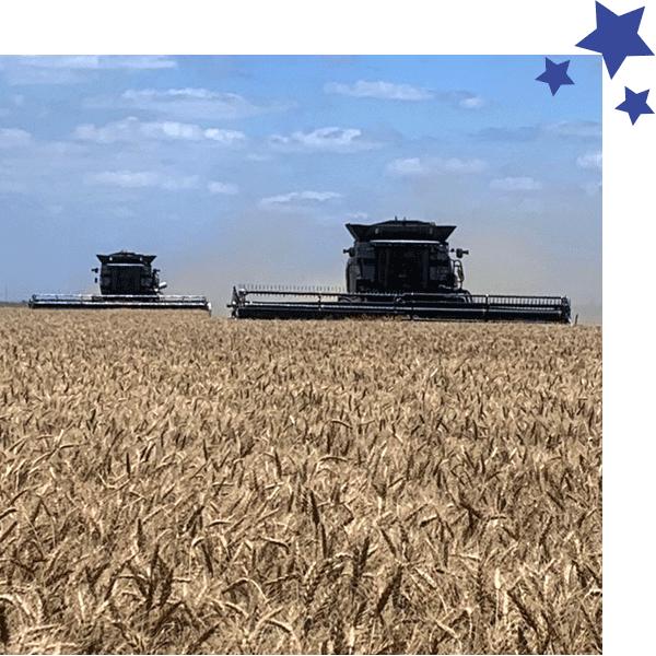 SCO/STAX Yields –Wheat | Fowler Agency, LLC