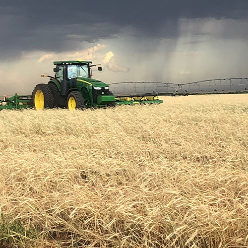 Wheat Price Discovery | Fowler Agency, LLC