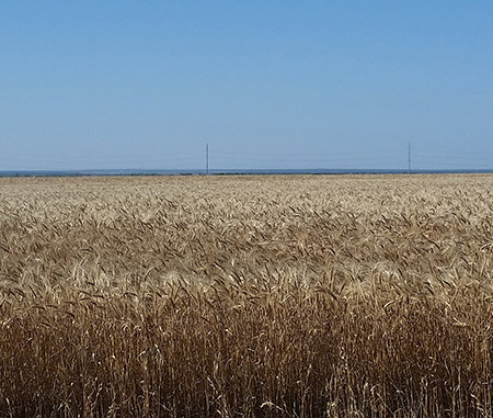 Proud to Farm | Wheat | Crop Insurance