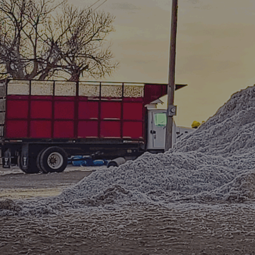 Cottonseed Policies and Procedures