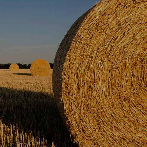 Annual Forage Policies and Procedures